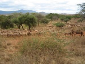 ナイロビからタンザニア国境へ向かう。ラクダも家畜の一種。