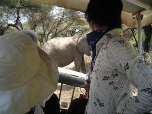 象がすぐ近くに。