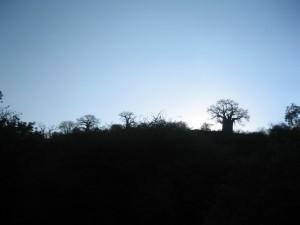 崖の上のバオバブのシルエット。