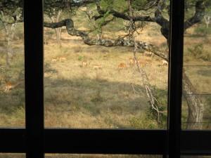 Lobo Wild Life Lodgeに宿泊。部屋の直ぐ外まで動物たちがやってくる。
