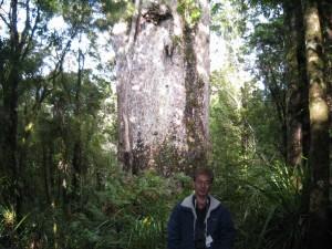 カウリの巨木の前で